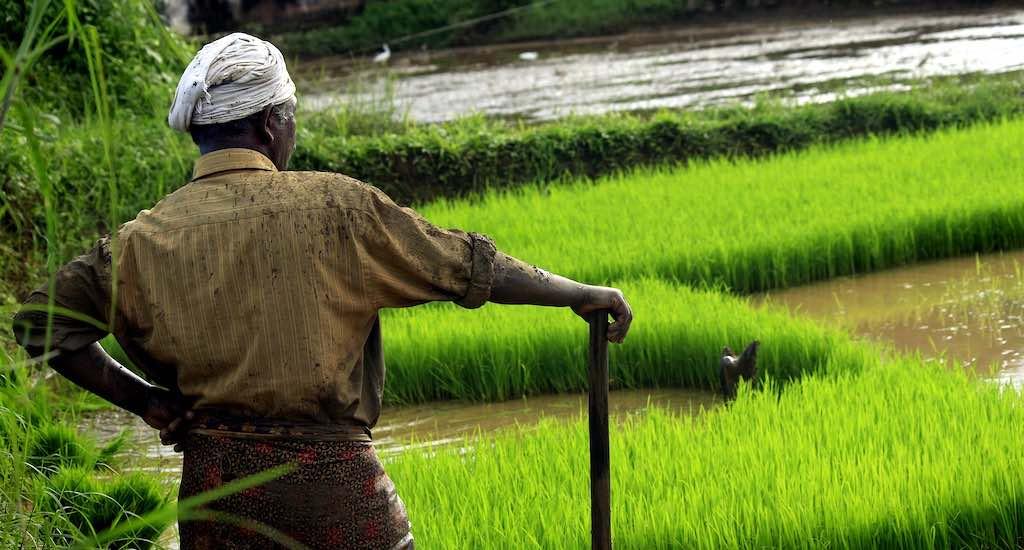 کشاورزی دقیق در هند