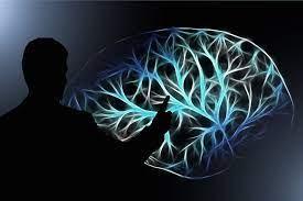 سوگیری مغز